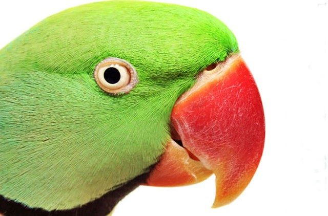 bancuri.epistole.ro bancuri cu papagali, bancuri cu papagali 2018, bancuri cu papagali vorbitori